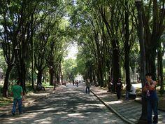 Conheça 10 lugares incríveis para fotografar em São Paulo - Parque da Luz