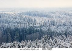 Stock Photo: Winter forest aerial view background with fozen trees and misty air in Finland. -
