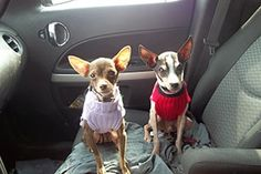 Road trips with your dog - tips from ASPCA