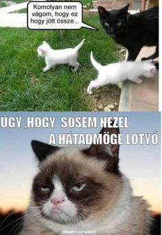 """Képtalálat a következőre: """"grumpy cat magyarul felirattal"""" Pixie Bob, Cat Breeds, Cat Memes, Laughter, Avengers, Cute Animals, Funny, Pictures, Grumpy Cats"""