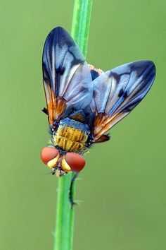 40 Outstanding Macro Photography Examples and Tips 40 exemples exceptionnels de photographie macro Cool Insects, Flying Insects, Bugs And Insects, Fotografia Macro, Beautiful Creatures, Animals Beautiful, Cute Animals, Beautiful Bugs, Beautiful Butterflies