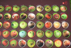 Astigarraga Basque Cider Museum - Apple varieties