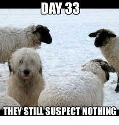 Day 33. They still suspect nothing.