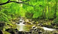 ¿Conoces cuál es la importancia de los bosques y áreas verdes? ¡Aquí te la decimos! http://bit.ly/Xsbb11