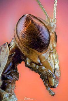 Mantis Head Javier Rupérez on 500px