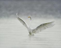 Photograph The Landing by Daniel Parent on 500px