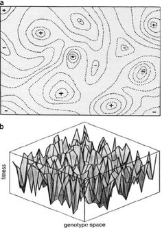 Black and white adaptive landscape representations are shown in panels a and b. In panel a, the adaptive landscape is composed of hand-drawn, dotted contour lines, with plusses and minuses indicating the peaks and valleys. In panel b, the adaptive landscape is a three-dimensional illustration, represented as a transparent cube. Inside the cube, the space between jagged interconnected lines is shaded grey, so that the interior of the cube appears to be filled with a drawing of jagged, grey…