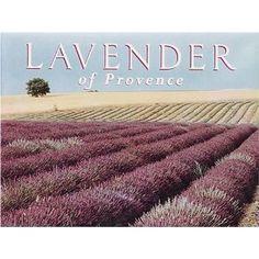 Lavender of Provence: Amazon.ca: Angelo Lomeo: Books