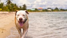 12 Summer Safety Tips for Dogs - Petreadset On my account you will find the most useful pins. Summer Safety Tips, Dog Health Tips, Summer Dog, Dog Facts, Dog Care Tips, Dog Training Tips, Dog Grooming, Dog Love, Dogs And Puppies