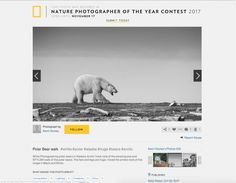 Nature Photographer of the Year Contest 2017 The National Geographic Nature Photographer of the Year contest has selected Kevin& photos as finalists. Alaskan Brown Bear, Albuquerque News, African Safari, National Geographic, Polar Bear, Nature, Photos, Photography, Naturaleza