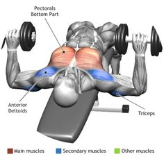 CHEST - DUMBBELL RECLINE BENCH PRESS