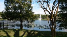 Lake Lily Maitland