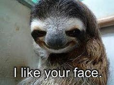 29 Best Sloth Memes Clean Images Sloth Sloth Meme Sloth Life