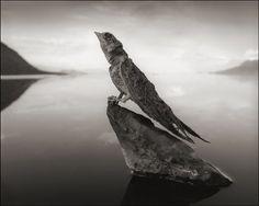 Foto ini tunjukkan ganasnya Danau Natron © 2017 Nick Brandt