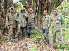 Wilderness Safaris Bisate Lodge - UPDATED 2018 Reviews & Price Comparison (Ruhengeri, Rwanda) - TripAdvisor Gorilla Trekking, Hotel Reviews, World War Ii, Wilderness, Victorious, Wwii, Trip Advisor, Military Jacket, Safari