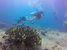 http://rainbowscuba.com/hawaii-scuba-diving-reservations.html