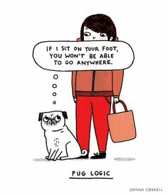 Pug logic!!!!