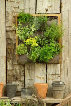 Vertical garden from wood from a pallet