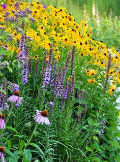 rudbeckia (black eyed susan) with liatris (blazing star or gay flower) and echinacea (coneflower) Ontario, Home And Garden Store, Prairie Garden, Black Eyed Susan, Public Garden, Garden Borders, Garden Care, Native Plants, Garden Planning