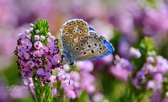 Colorful Summer Blues by gorka orexa on 500px ~