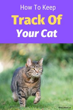 Discover how to track your cat giving you peace of mind. Knowing where your cat is gives you peace of mind and can help keep her safe. Find out how pet trackers work and which are the best, plus lots more. #howtotrackyourcat #petracker #trackingcollar #catcaretips
