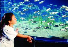 MARITIME AQUARIUM  Norwalk http://blog.ctnews.com/serra/2016/08/09/discounted-parking-available-online-for-maritime-aquarium-guests/