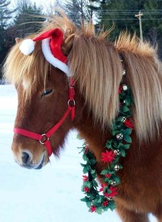 .Festive Dressed Horse..+ antlers..and you have a reindeer..almost! ✯ nyRockPhotoGirl ✯holiday #cheer
