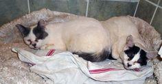 750 euros d'amende, c'est la peine dérisoire à laquelle a été condamnéun sans-abri qui avait maltraité plus de 80 chats à Rosny-sous-Bois (Seine-Saint-Denis). Il écope par ailleurs de quatre mois de prison ferme pour port d'arme prohibé et d'une obligation de soins psychologiques.