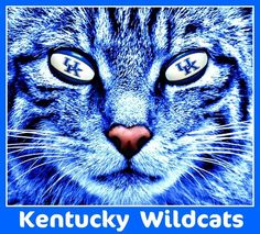 Let's do this Big Blue Nation! Kentucky Wildcats Football, Uk Wildcats Basketball, Basketball Is Life, Uk Football, Kentucky Basketball, Basketball Coach, University Of Kentucky, I Love Cats, Cool Cats