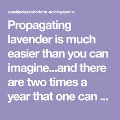 Propagating lavender is much easier than you can imagine...and there are two times a year that one can take cuttings to root- in the spring ...