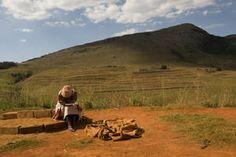 #ElNiño réduit les perspectives de #productionagricole en #AfriqueAustrale #agriculture  En Afrique australe, les perspectives de production concernant les cultures et l'élevage ont été revues à la baisse du fait du phénomène météorologique El Niño qui a réduit les pluies et provoqué une hausse des températures.  Lisez la suite à https://fr.adalidda.net/?cat%5B0%5D=afriqueest