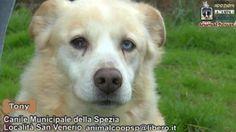 Videoadozioni: Canile Municipale La Spezia (01)