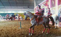 Instagram media by sultanakhmedinna - #лошади очень умные и красивые животные являются священным животным животным в двадцати трёх странах #свяещенноеживотное