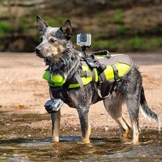 Capture the world from the point of view of your dog with the GoPro Fetch Dog Harness This harness allows you to mount your GoPro to your dogs chest or back via www.SuperRadStuff.com