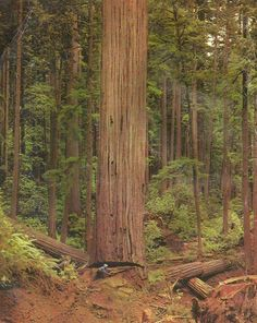 Logging - rigging men and timber fallers Found..Unknown faller in redwood country..Back in the day.