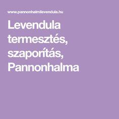 Levendula termesztés, szaporítás, Pannonhalma