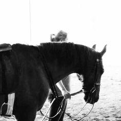 Arena time  #horse #riding #beautiful