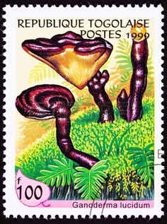 Lingzhi Mushroom, Ganoderma lucidum.  Chinese medicinal mushroom, the herb of spiritual potency. stamp printed in Republique Togolaise, 1999