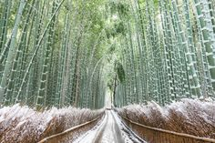 Silent Path Photo by Takahiro Bessho — National Geographic Your Shot