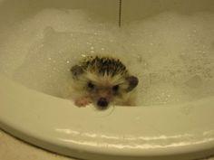 Aw hedgehog ^-^