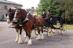 Arclid Horsedrawn Carriages, Wedding Carriages for your your special day. View more photos, video, offers an details via: http://www.tyingtheknot.org/arclidhorsedrawncarriages.htm