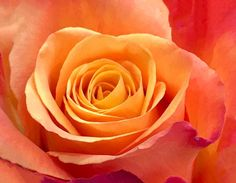 """3 Beğenme, 2 Yorum - Instagram'da Nesrincik (@nesrin_kefeli): """"#fotoselect #gül #rose #doğa #nature #makro #macro #cicekler #flowers #flowerstagram #iphone7plus…"""""""