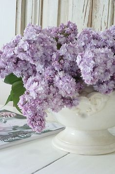 lilac I orgona Lilac Flowers, Purple Lilac, My Flower, Spring Flowers, Beautiful Flowers, Simply Beautiful, Color Lavanda, Lilac Bushes, Lavender Cottage