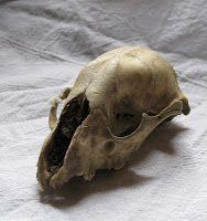 POTIONSMITH: Montauk Monster Skull
