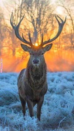 🧡 From Beautiful Wildlife Nature Nature Animals, Animals And Pets, Baby Animals, Funny Animals, Cute Animals, Wildlife Nature, Wildlife Photography, Animal Photography, Sunrise Photography