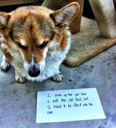 I Climb Up The Cat Tree And I Eat The Cat Food -- funny dog shaming web site, this pic really fits lol