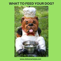"""Hello friends, kindly check my new blog """"What To Feed Your Dog?"""" #french_bulldogs #dogs #dogsofinstagram #awww #pets #animals #dogslover #dogsowner #rescuedogs #friends #love #tbt #nature #dog #ilovedogs #ilovemydog #puppy #yourdog #bulldogs #puppiesofinstagram #dogsworldwide #dogoftheday #dogstagram #fun #amazing #doggie #sway #lovedogs #dogsofinstaworld"""