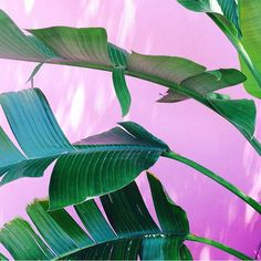 #PlantsOnPink by @caseypins