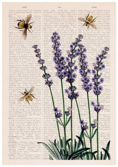 Bees with Lavender Print - Housewarming Gift - Bee Wall Art .-Bees with Lavender Print – Housewarming Gift – Bee Wall Art – Dictionary Art Print – Book Page Art – Flower Book Print – Wall art home decor Bees with Lavender flowers by PRRINT on Etsy - Book Page Art, Book Art, Photo Wall Collage, Collage Art, Painting Collage, Wall Prints, Poster Prints, Art Print, Fun Prints