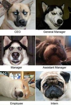 I would like a General Manager, please.